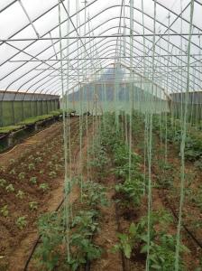 greenhouselines